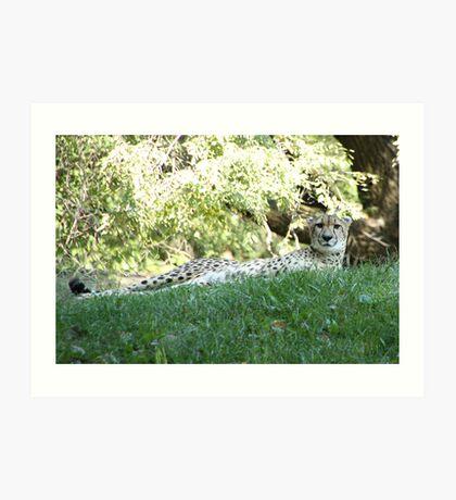 Leopard Lounging Art Print
