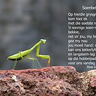 Soenbekkie by Rina Greeff