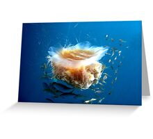 Lion's Mane Jellyfish and Friends Greeting Card