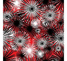 black and white firecracker floral Photographic Print