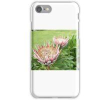 "Protea Cynaroides ""King Protea"" Red iPhone Case/Skin"