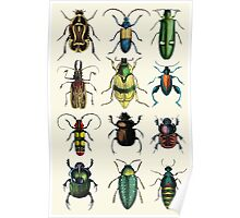 Jeweled Beetles Poster