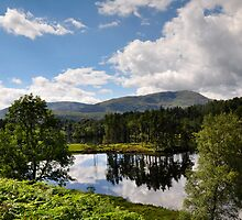 Summer at Tarn Hows by Jacqueline Wilkinson