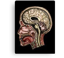 Sagittal head section Canvas Print