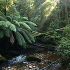 Nelson Falls , Tasmania , Peacefully by Tom McDonnell
