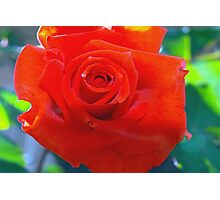 Red rosebud from the front porch Photographic Print