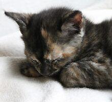 Sleepy Sleeps by Ladymoose