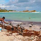 Guy feeding pelicans in Tulum Beach, MEXICO by Atanas Bozhikov NASKO