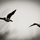 Flight of the Barnacle Geese by derekbeattie