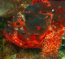 scorpionfish rottnest island reef  by peterbeaton