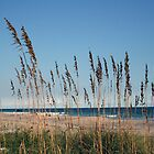 dune weeds by iannarinoimages