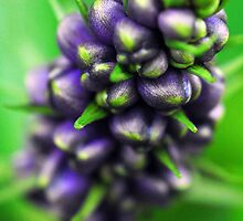 Ginger Plant 3 by Fine Art Photography by Paul Hamilton