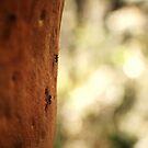 running ants  by Matthew  Smith
