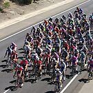 Cycling The Tour Down Under in South Australia  by janfoster
