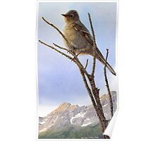 valley view / townsend's solitaire Poster