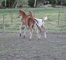 Buck, Run, Play by skyhorse