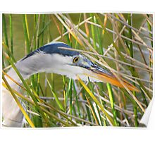 Great Heron Hunting Poster