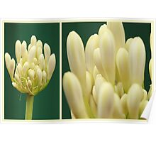 Agapantha Diptych Poster