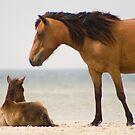 """Protector"" - wild horses on the beach of Cedar Island, NC by ArtThatSmiles"