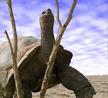 """Reaching For The Green"" - giant tortoise has determination by ArtThatSmiles"