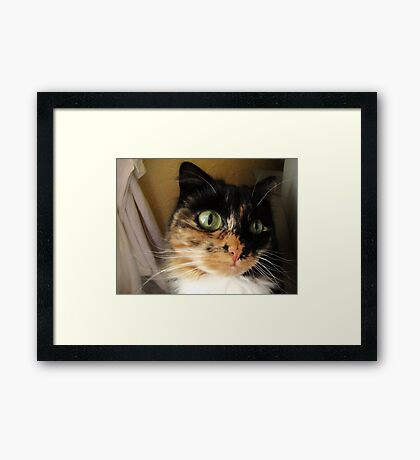 Silly Lily Framed Print