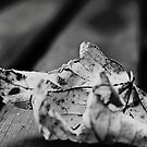 Last of autumn leaf  by ARIANA1985