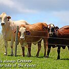 The Grass is always Greener on the other side of the Fence! by Kym Howard
