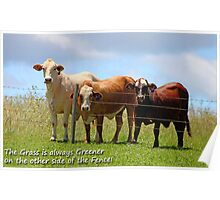 The Grass is always Greener on the other side of the Fence! Poster