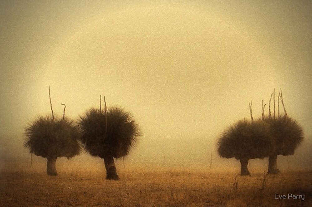 Grass Trees (Xanthorrhoea) in Fog, Aged by Eve Parry