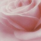 Soft beauty by Karen  Betts