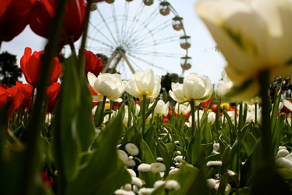 Fairground Ferris Wheel by simbachee