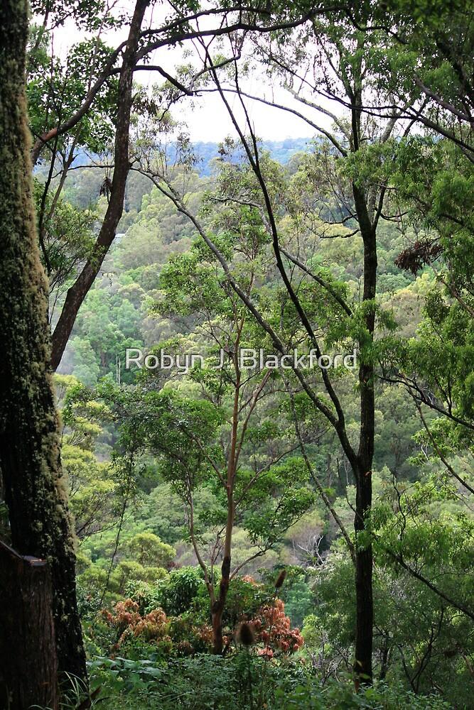 Window to Tallebudgera Valley by aussiebushstick