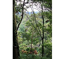 Window to Tallebudgera Valley Photographic Print