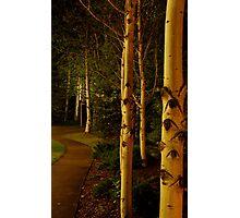 night aspens.  snowmass, colorado Photographic Print