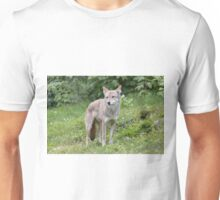 A lone Coyote in the forest Unisex T-Shirt