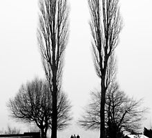Treescapes 2 by Gary Steele