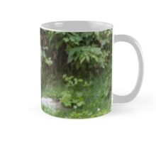 A lone Coyote in the forest Mug