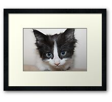 Mia the meow Framed Print