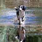 Happy in Water! by Julie Sleeman