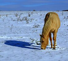 Golden Horse in Snowy Meadow by Robert Miesner