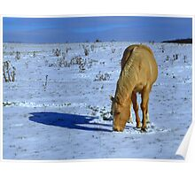 Golden Horse in Snowy Meadow Poster