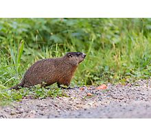 The Beaver in the wild Photographic Print
