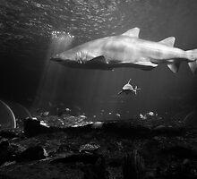 Feeding Pool by Tim Luczak