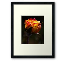 Glowing Rose Framed Print