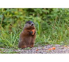 The Beaver eating a carrot Photographic Print