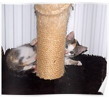 Nellie and the Scratching Post  Poster