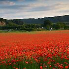 Bewdley Poppy Field by Cliff Williams