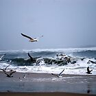 Sand, Sea  and Seagulls by Mattie Bryant