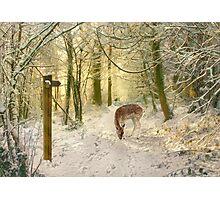 Woodland sunrise Photographic Print