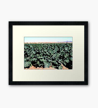 Broccoli...  Framed Print